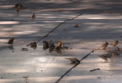Bird party on September 19th