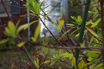Alert branches