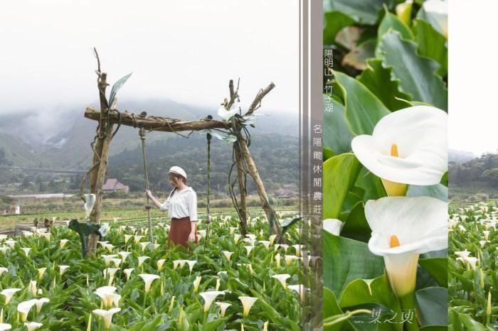名陽匍休閒農莊,2020陽明山海芋季,摘一朵青春活力送給自己