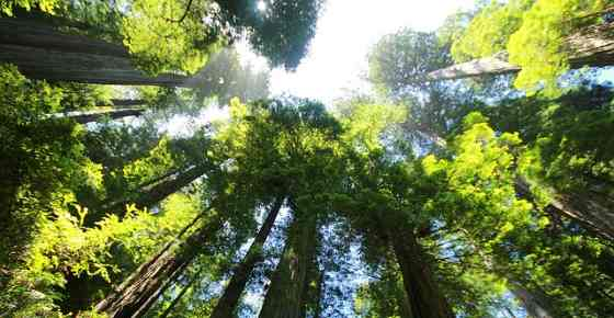 Every editorial product is independently selected, though we may be compensated or receive an affiliate commission if you buy something t. Types Of Forests Forest Biome Temperate Tropical Boreal And More