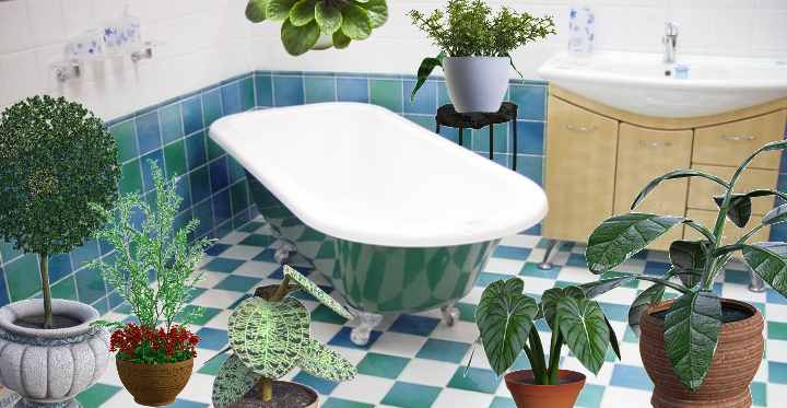 The Best Shower Plants To Keep In Your Bathroom Low Light No Light