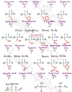 Mcat amino acids cheat sheet preview also acid chart study guide rh leah sci