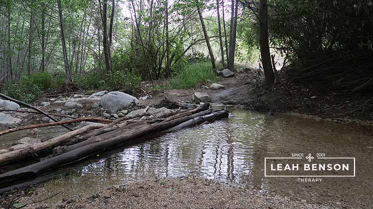 Photo of a creek in the woods