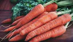 close up photography of orange carrots