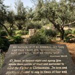The Garden of Gethsemane - Photo Credit: Fr. Darryl Millette