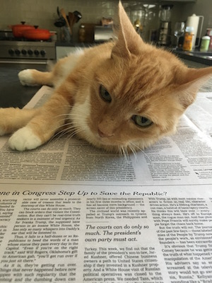 Orange tabby cat laying on the New York Times newspaper