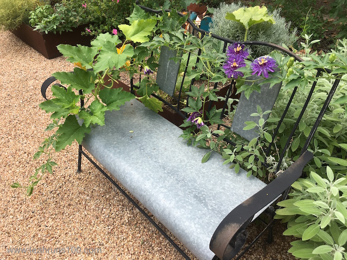 Passionflower blossoms on metal garden bench