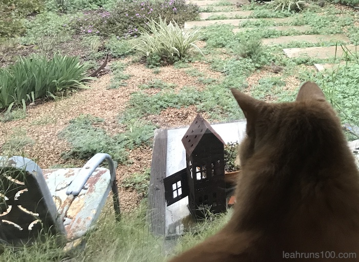 cat looks out window at yard in winter