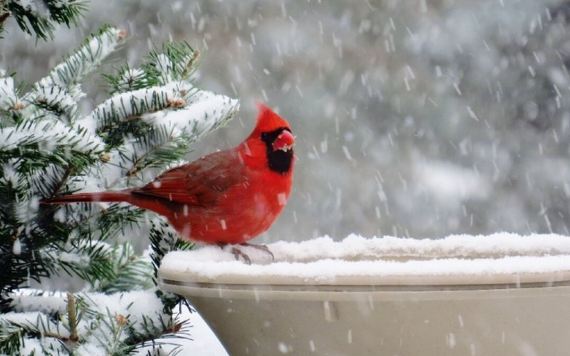 image post header december snow cardinal