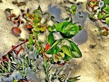 HDR-Plant-Snow