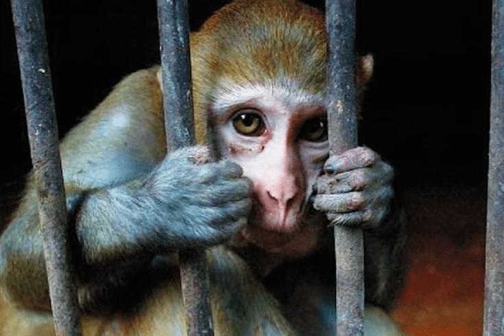 LEAL VIVISEZIONE: LE COMMISSIONI DEL SENATO E IL MINISTERO DELLA SALUTE RESPINGONO IL TENTATIVO DI PROROGA DEI TEST SU ANIMALI DI ALCOL E DROGHE