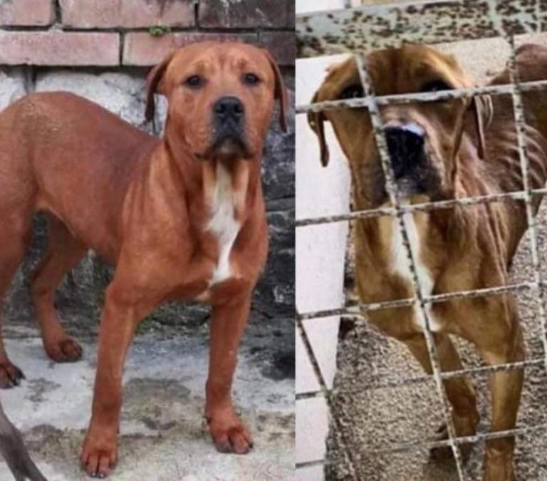 ANIMALISMO: LEAL FOTO E VIDEO CONTRO LO SCANDALO DELLE DEPORTAZIONI DI ANIMALI NEI CANILI PRIVATI