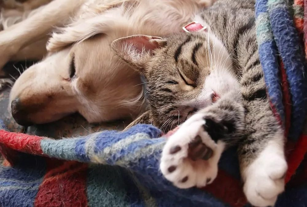 ANIMALISMO LEAL INFORMA: SALUTE ANIMALE ARRIVA L'OK AI FARMACI AD USO UMANO PER CURARE I NOSTRI ANIMALI