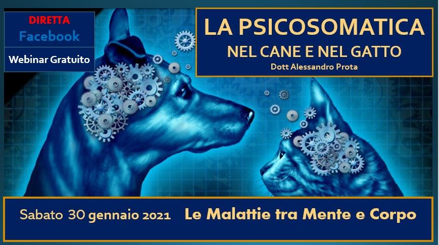 LE MALATTIE PSICOSOMATICHE AFFLIGGONO ANCHE GLI ANIMALI DETENUTI NEI LABORATORI DI VIVISEZIONE