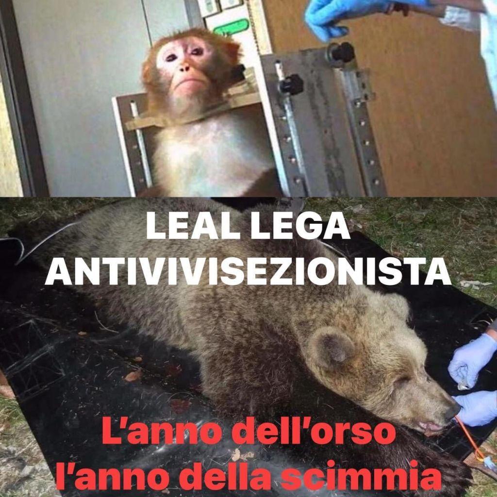 Vicenda degli orsi del Trentino e degli esperimenti su macachi