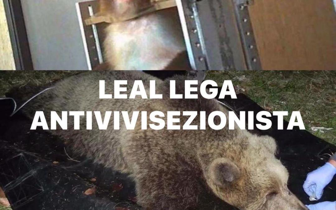 LEAL ANIMALISMO: L'ANNO DELL'ORSO E DELLA SCIMMIA