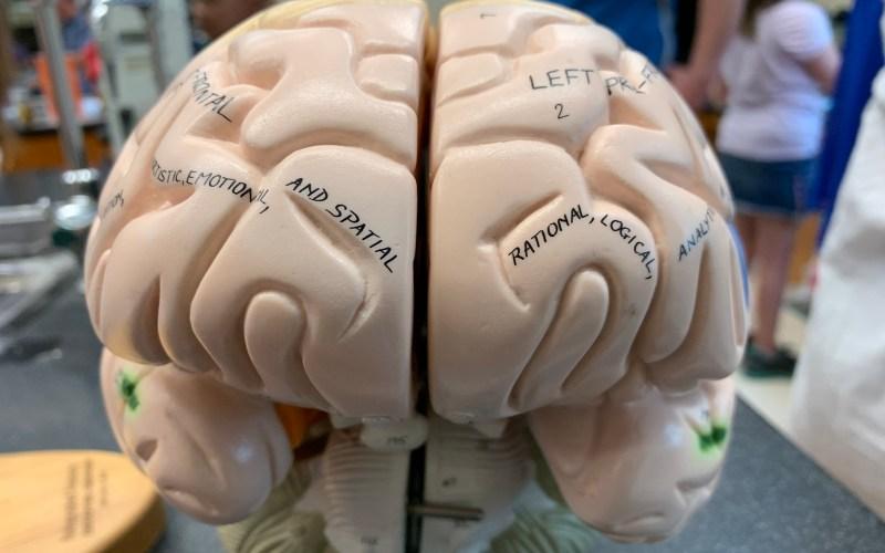 The Creative Brain And The Gemba Walk
