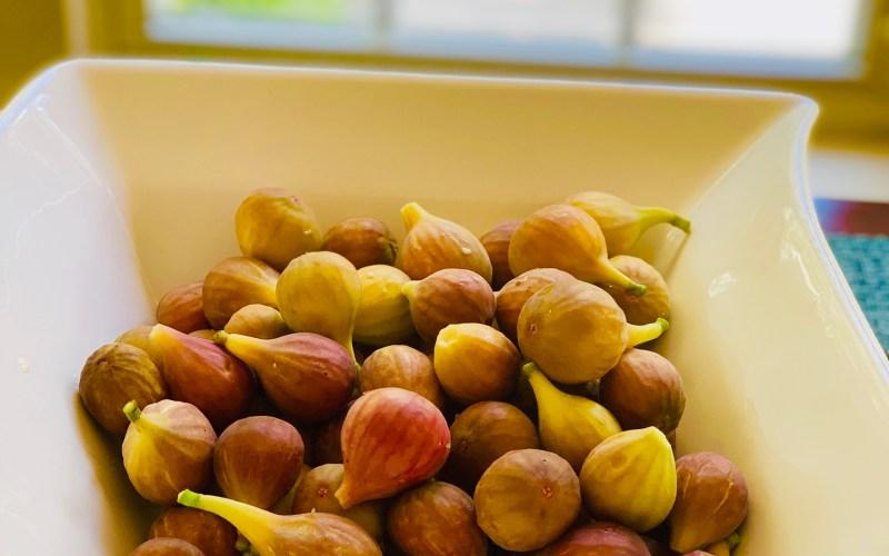 Fig Tree Bears Fruits