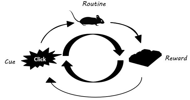 rats habit loop