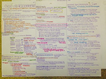 Biomed notes (1/2 a class)