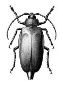 Ilustração em nanquim sobre papel vegetal 180g/m². recebeu o primeiro lugar no concurso de Ilustração de Zoologia no Congresso brasileiro de Zoologia, 2006