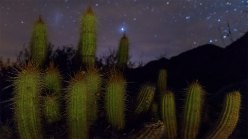 Estrellas y cactus