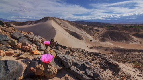 Dunas, nubes y flores de cactus