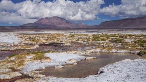 Flora, volcán y agua