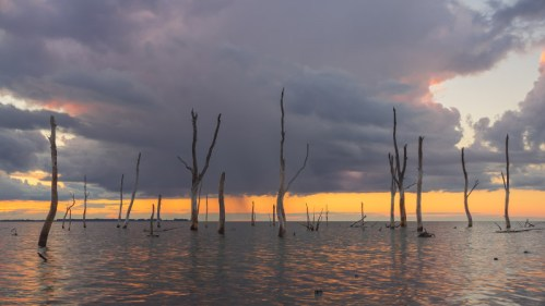 Árboles muertos y laguna
