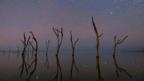 Árboles muertos y estrellas