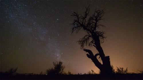 Árbol y Vía Láctea