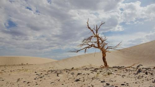 Árbol, dunas y nubes