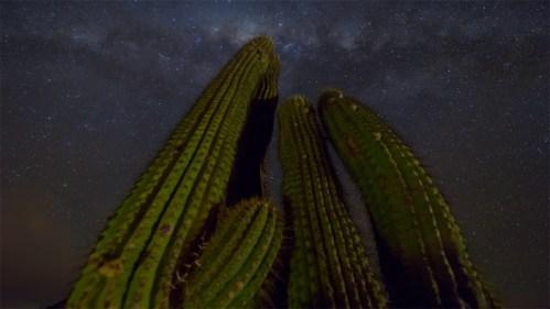 Vía Láctea y cactus