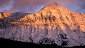 montana 4