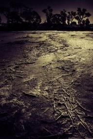 salt-lake-sticks-monochrome-mm