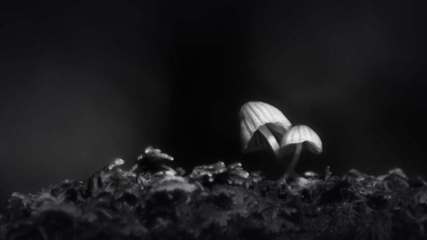apollo-bay-funghi-rainforest-monochrome