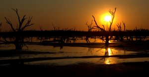 gail-sunset-salt-lake-trees