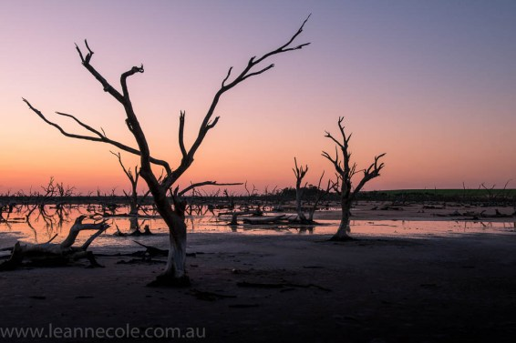 nyahwest-salt-lakes-towanplains-workshop426