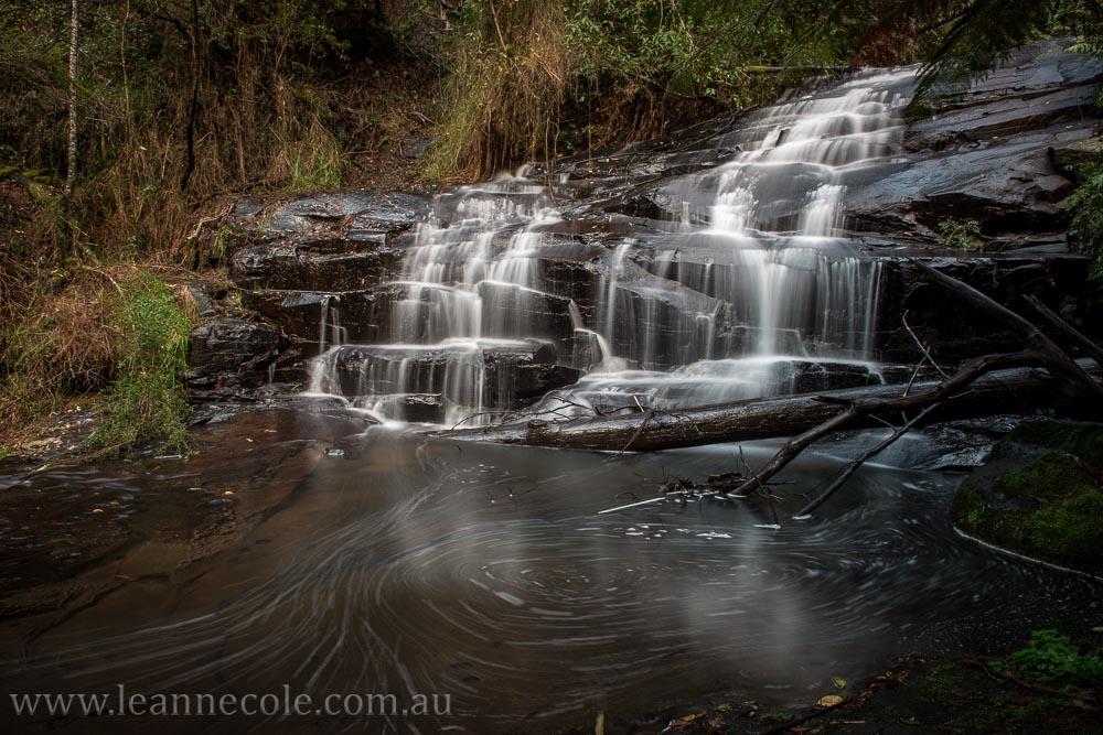lorne-waterfalls-macro-mushrooms-rainforest-2073