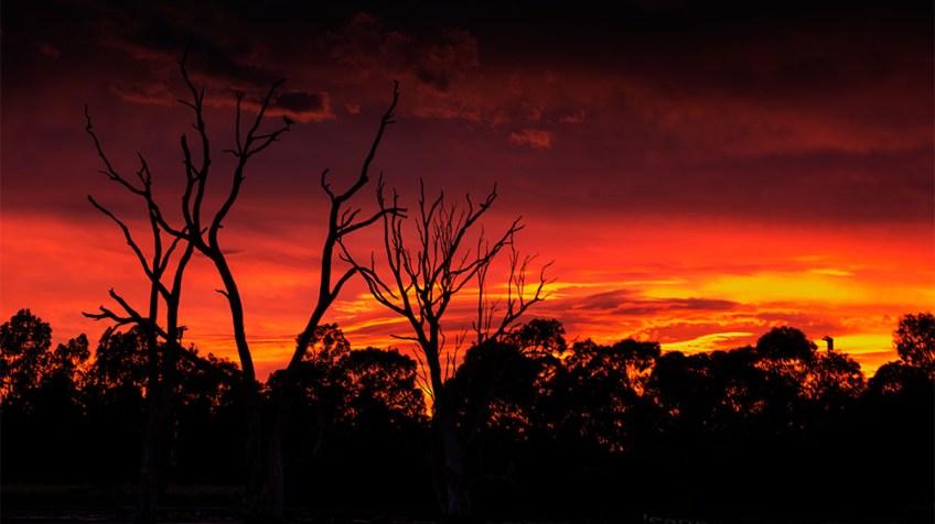 banyule-flats-sunrise-swamp-melbourne