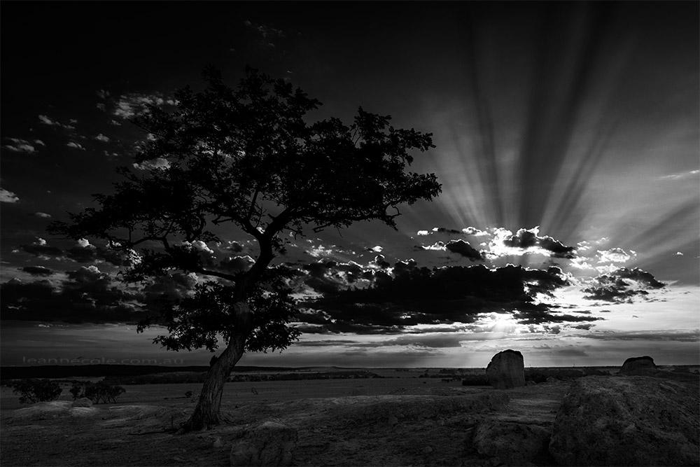dog-rocks-sunset-sunrays-monochrome