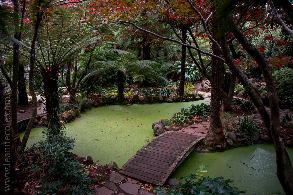 alfrednicholas-gardens-flowers-lake-dandenongs-4176