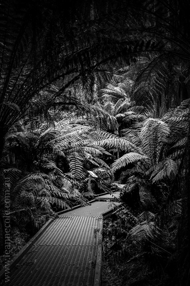 apollo-bay-rainforest-otways-walkway-4379