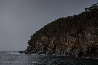 bruny-island-southcoast-cliffs-cruise-4351