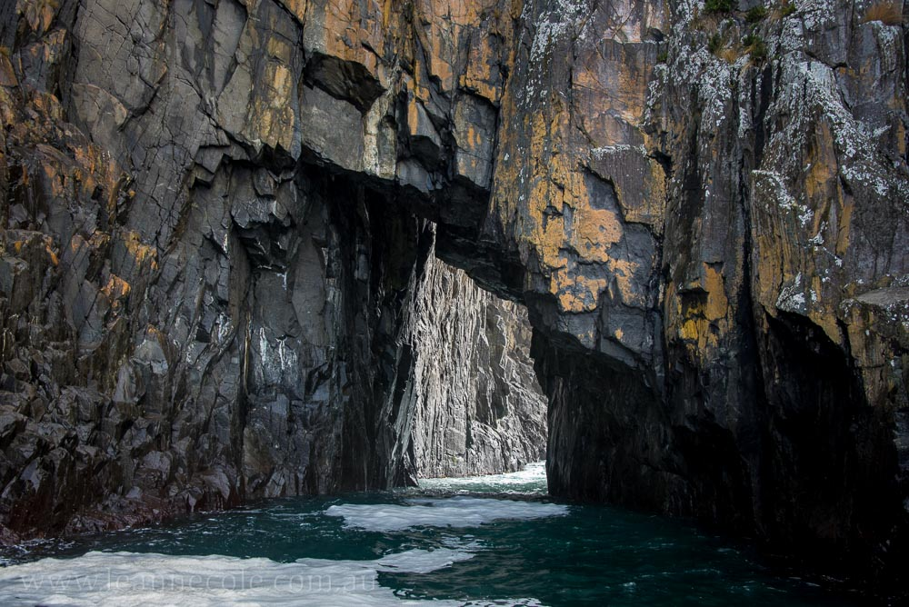 bruny-island-southcoast-cliffs-cruise-4435