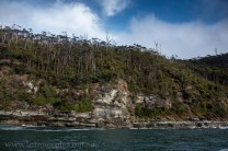 bruny-island-southcoast-cliffs-cruise-4599