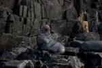 bruny-island-southcoast-cliffs-cruise-4675