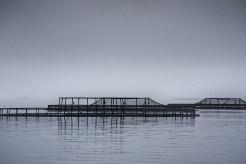 liberty-point-fishfarms-strahan-tasmania