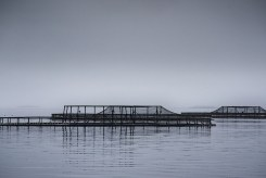 liberty-point-fishfarms-strahan-tasmania