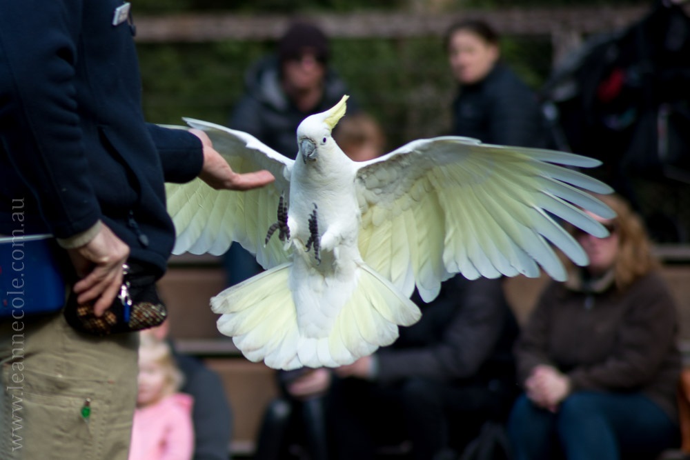 healesville-sanctuary-spirits-of-the-sky-0461